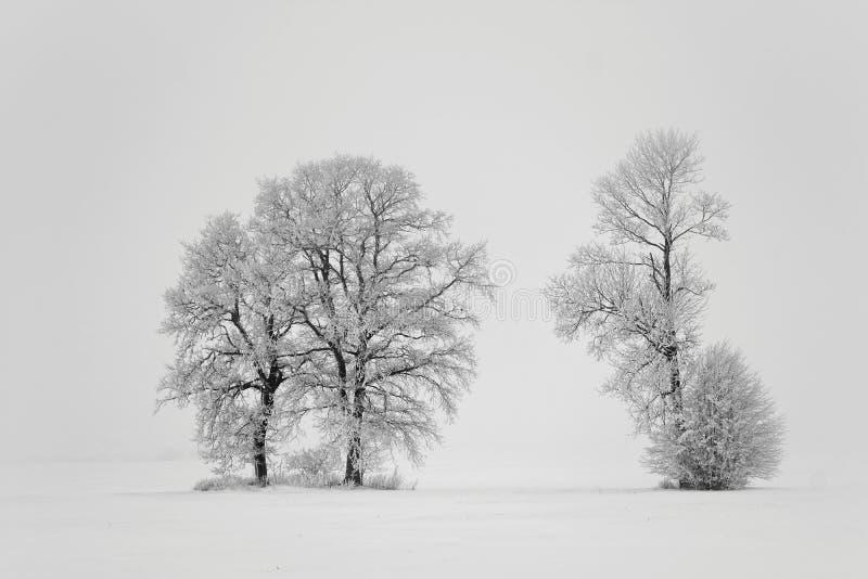 зима дня туманная Деревья в поле стоковые изображения