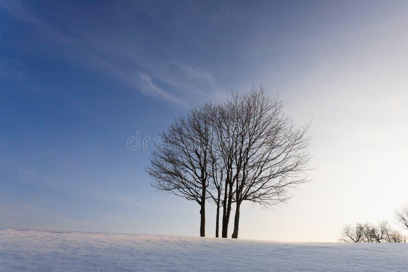 Зима дерева пасьянса стоковое изображение rf