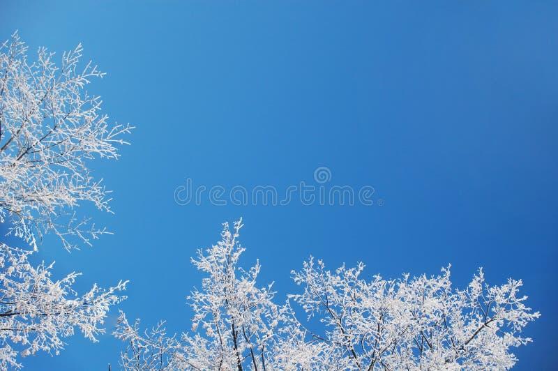 зима заморозка предпосылки стоковое фото