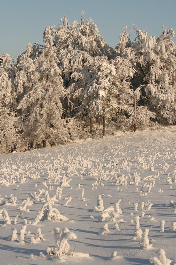 зима каникулы стоковые фото