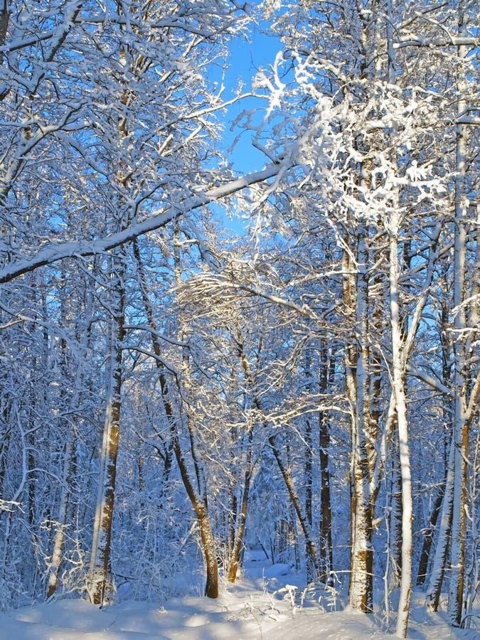 зима ландшафта сельская стоковое изображение rf