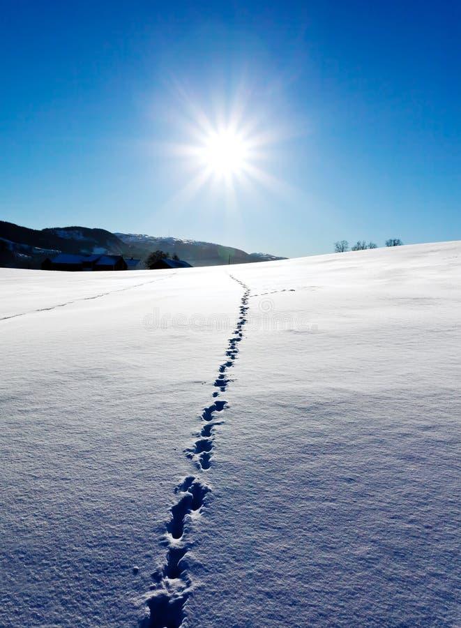 зима ландшафта стоковые изображения rf