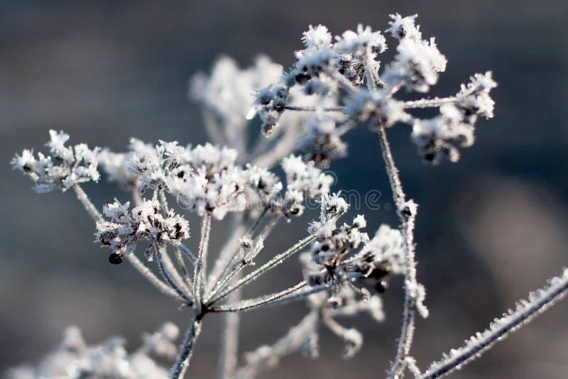 Зима ледяного кристалла детали стоковое изображение