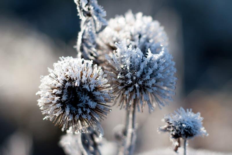 Зима ледяного кристалла детали стоковые изображения