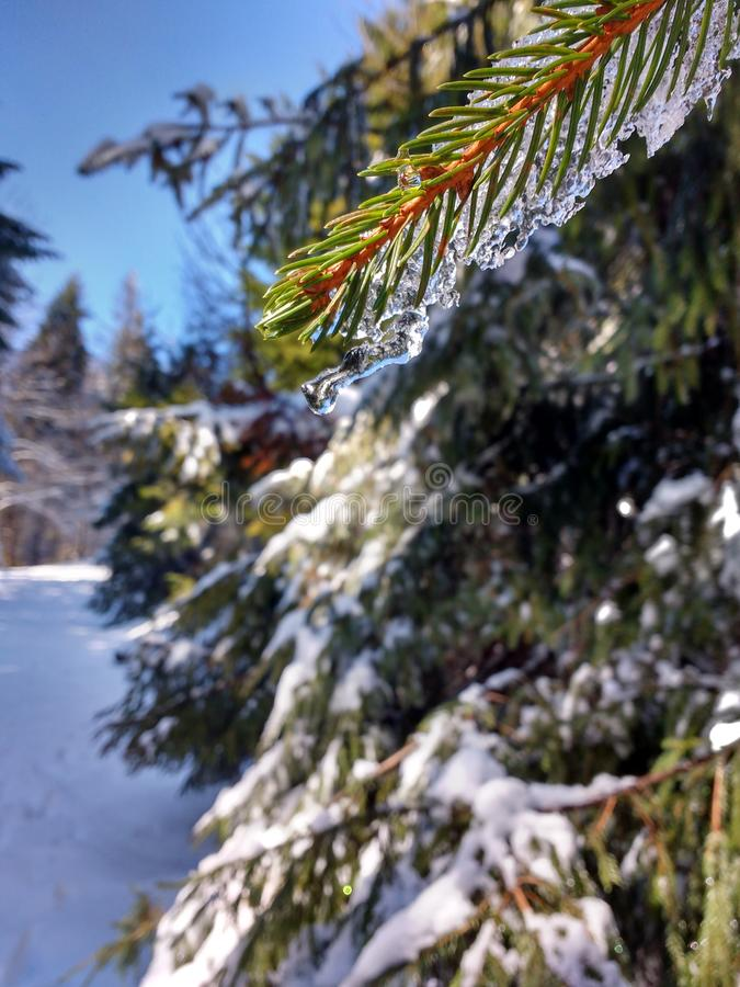 Зима макроса стоковые изображения
