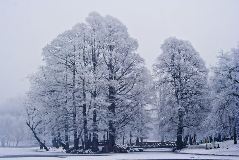 зима места парка стоковые фото