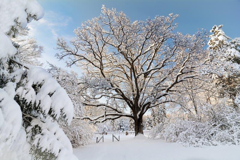 зима места снежная стоковые фотографии rf