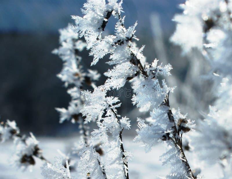 Зима может стильно украсить заводы стоковое изображение rf
