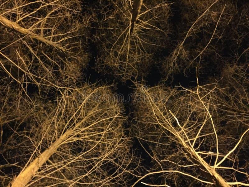 Зима на ноче стоковые изображения rf