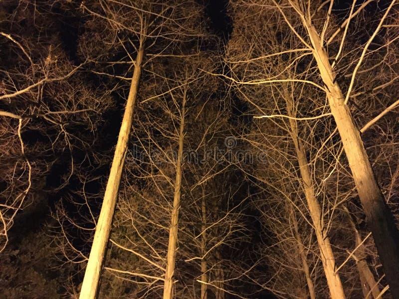 Зима на ноче стоковое изображение