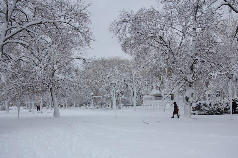 Зима на общем Кембриджа стоковая фотография