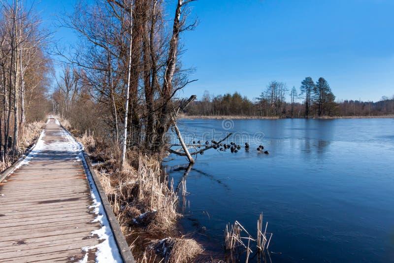 Зима на озере в темносинем стоковая фотография rf