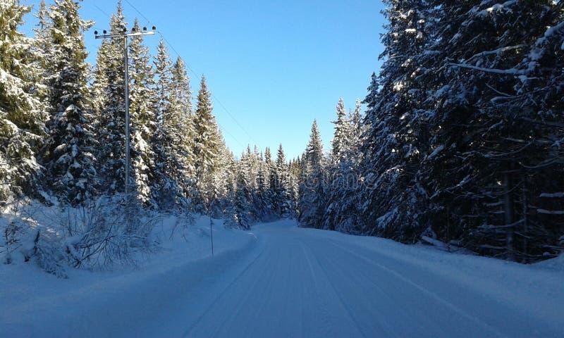 зима Норвегии стоковое изображение rf