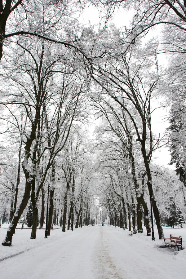 зима парка стоковое изображение