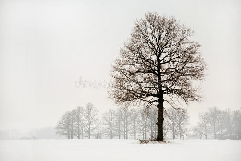 зима платья стоковые фотографии rf