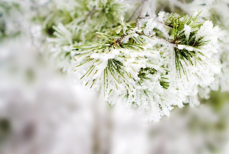 зима предпосылки стоковое фото