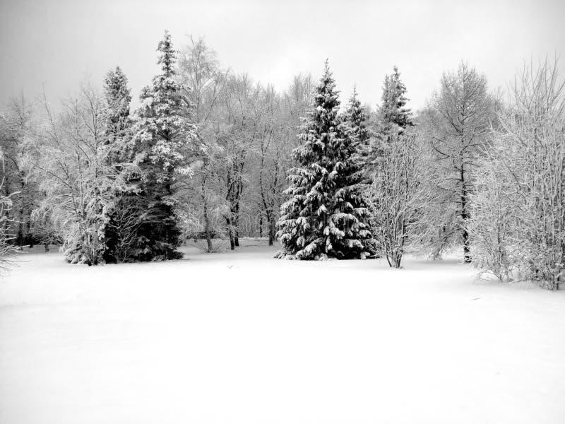 зима предпосылки стоковые изображения rf