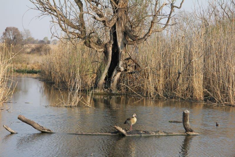 Зима природы - река, запруда стоковые фотографии rf