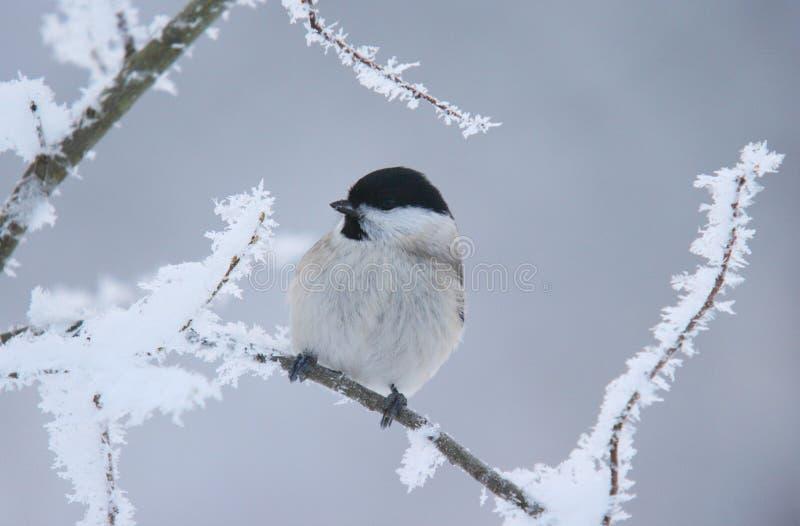 Зима приходит стоковые изображения