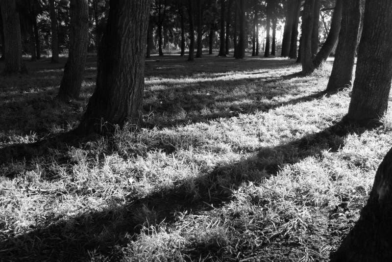 Зима приходит стоковое изображение rf