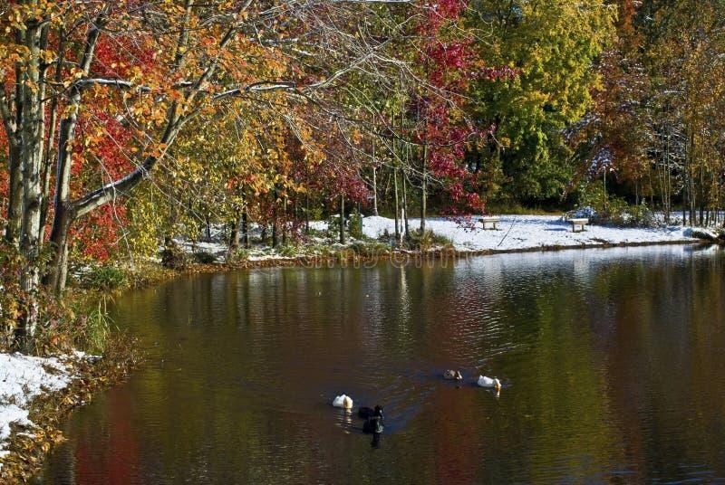 зима пруда утки осени стоковые изображения rf