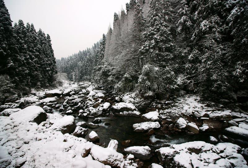Download зима пущи стоковое изображение. изображение насчитывающей сезон - 18379217