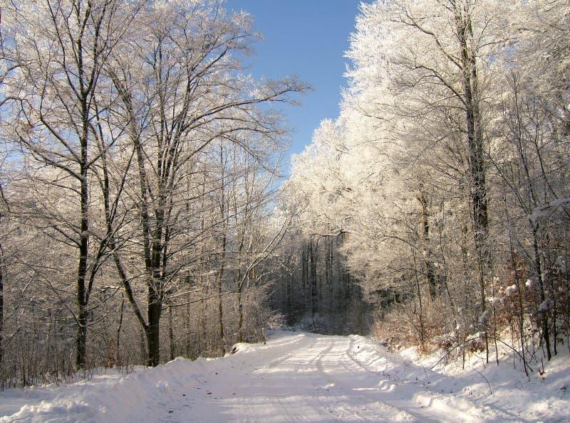 Download зима пущи стоковое изображение. изображение насчитывающей снежок - 493339