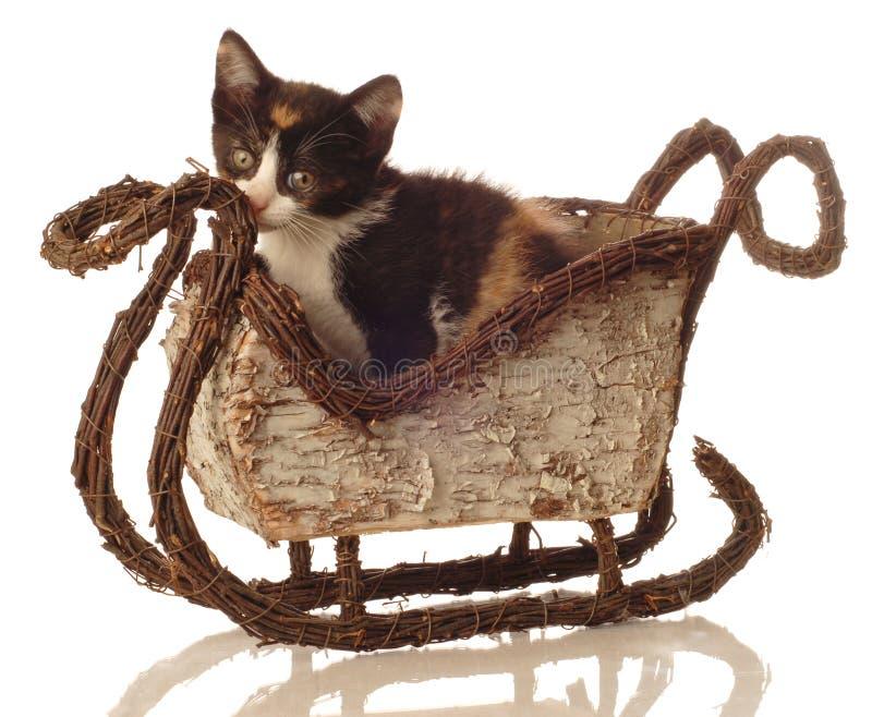 зима саней котенка ситца стоковое изображение