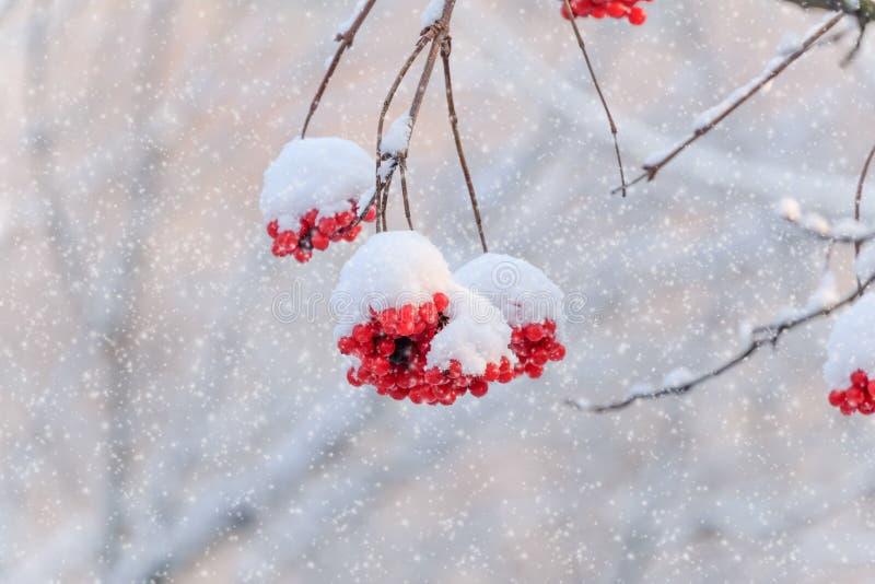 зима сада конструкции красотки предпосылки снежная ваша стоковые изображения