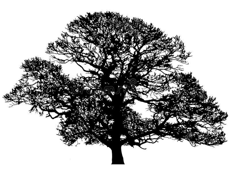 зима силуэта дуба иллюстрация вектора