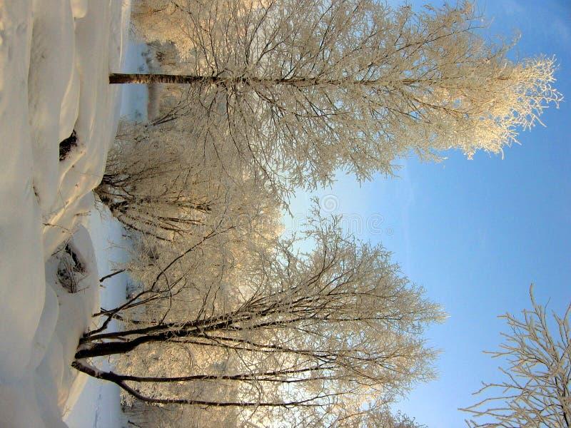 зима сказки стоковая фотография