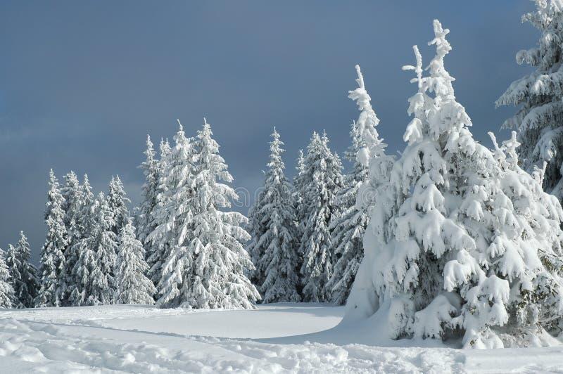 Зима снега стоковое фото