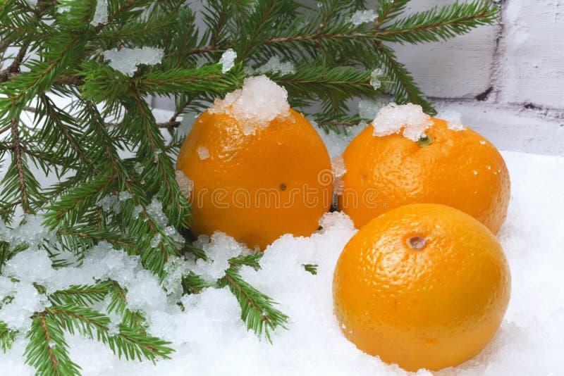 Зима снега Tangerines стоковые изображения rf