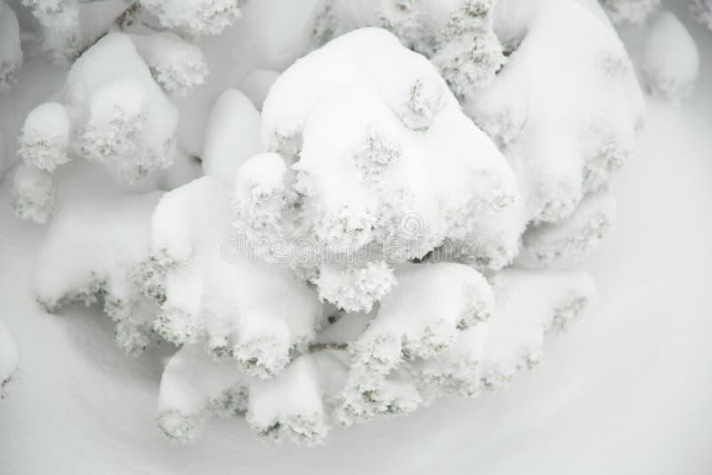 Зима, снег покрыла деталь завода стоковое изображение