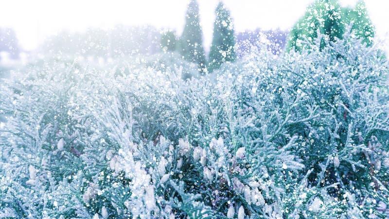зима снежинок снежка рождества предпосылки Спрус в снежке стоковые изображения