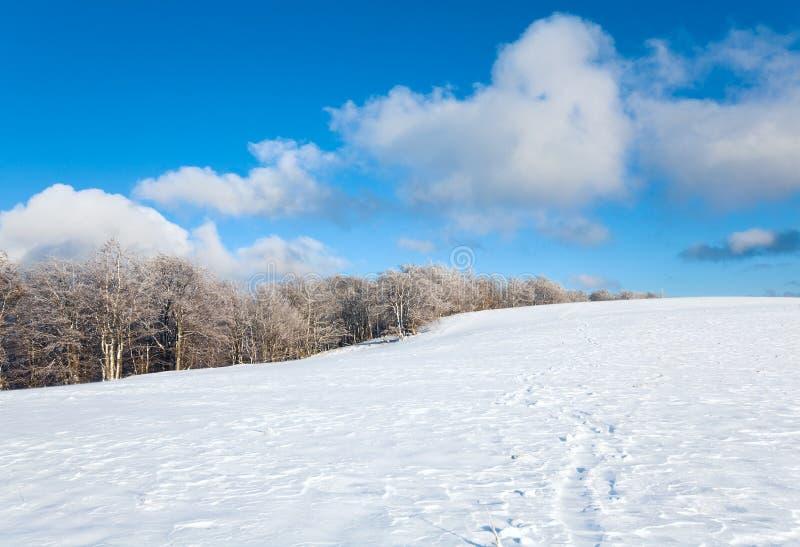 зима снежка горы пущи бука первая стоковое изображение rf