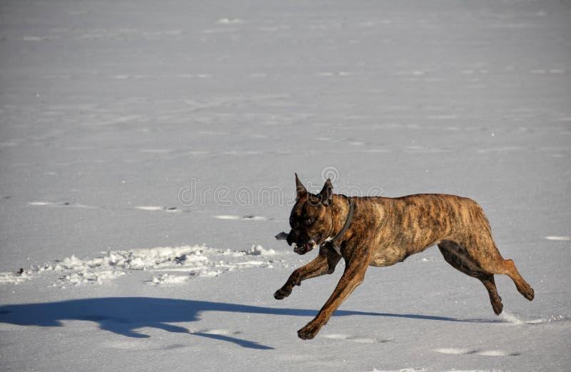Зима собаки Outdoors идет снег озеро стоковые изображения
