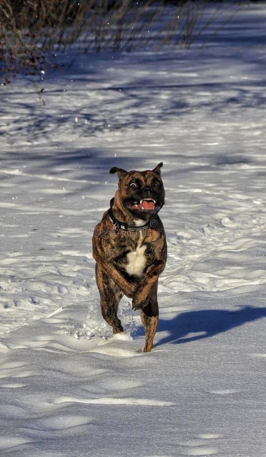 Зима собаки Outdoors идет снег озеро стоковое фото rf