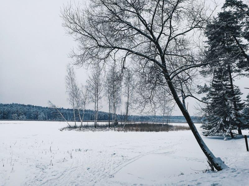 зима солнца природы пущи стоковая фотография