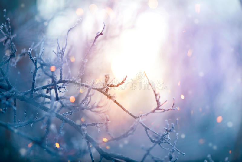 зима солнца природы пущи Предпосылка праздника рождества стоковое изображение