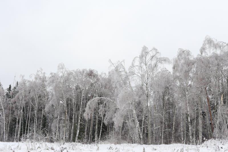 зима температуры России ландшафта 33c января ural Русская природа стоковое фото