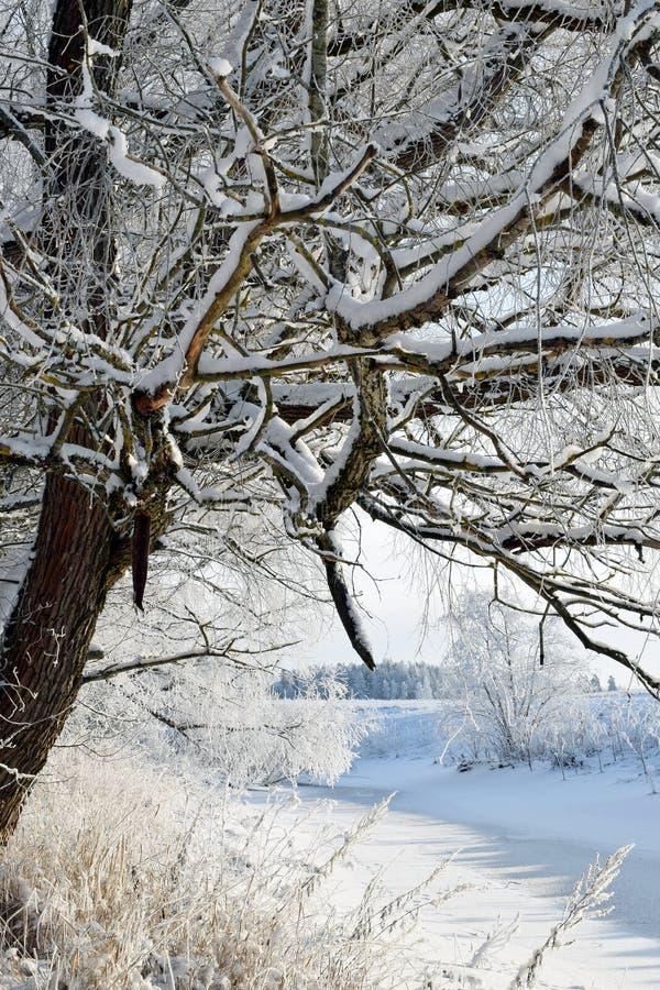 зима температуры России ландшафта 33c января ural Снег покрыл ветви и заводы дерева Малое, который замерли река в середине стоковое изображение rf