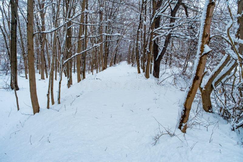Зима тропы Snowy стоковые изображения rf