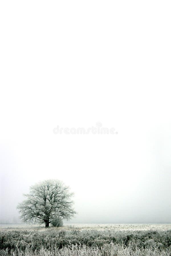 зима тумана стоковая фотография rf