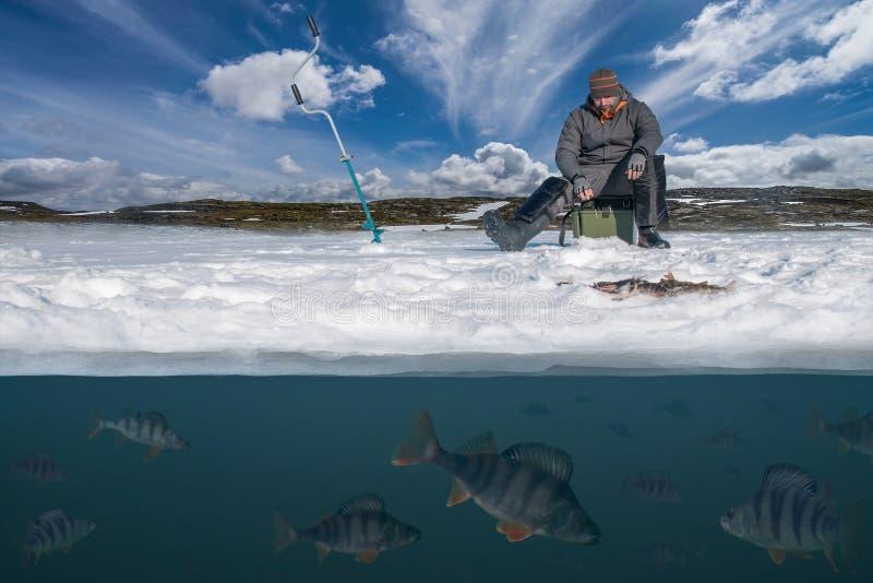 Зима удя концепцию Рыболов в действии Улавливая окунь f стоковое изображение