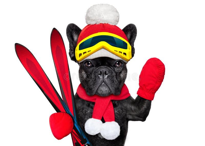 Зима лыжи собаки стоковое фото rf