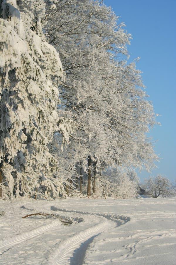 зима стоковые изображения rf