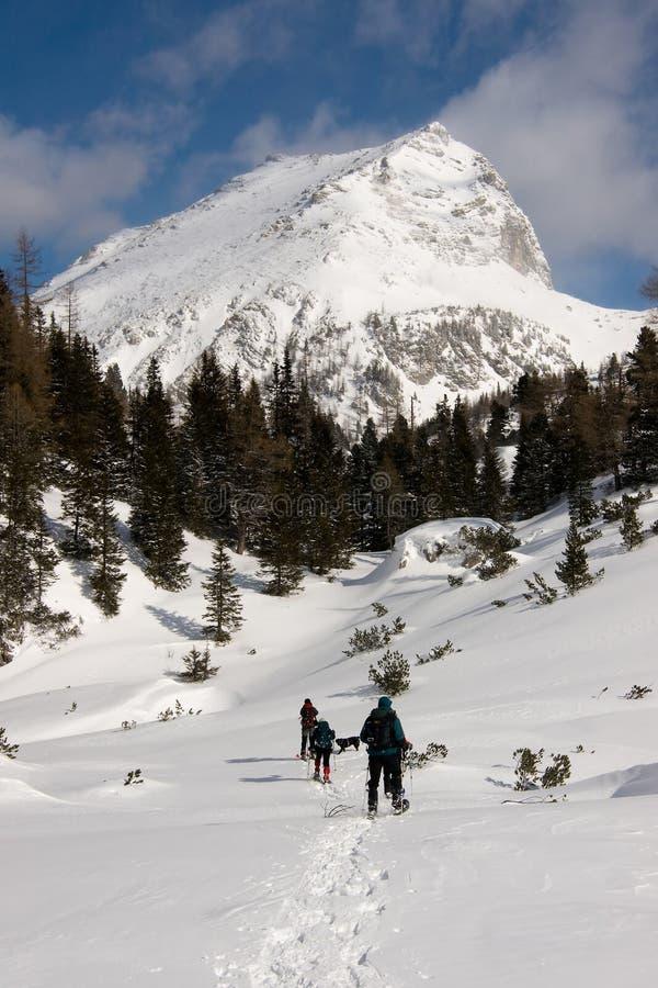 зима alps стоковая фотография