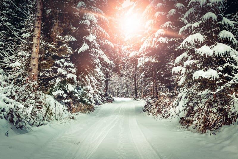 зима backroad стоковое изображение