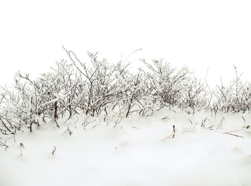 зима bush предпосылки снежная стоковые изображения